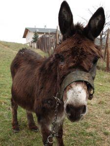 donkey-768501-m